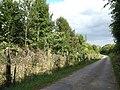 Forêt de Tournehem - panoramio (1).jpg