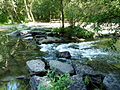 Forêt de la Robertsau-Cascade (2).JPG
