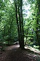 Forest @ Roc de Chère @ Talloires (35645768015).jpg