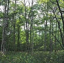 Forest Floor in Kamikochi.jpg