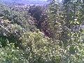Forest Kirinda Puhulwella - panoramio.jpg