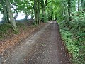Forest Road near Ty'n-y-caeau - geograph.org.uk - 530391.jpg