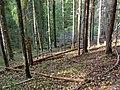 Forest above Zvārtes iezis.jpg