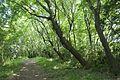 Forest in Mt.Nandai 10.jpg