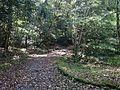 Forest near Hishigataike Pond in Usa Shrine.JPG