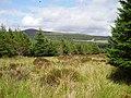 Forestry, Glen Glass - geograph.org.uk - 213839.jpg