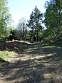 Forestry track in Craigmore Wood - geograph.org.uk - 418580.jpg