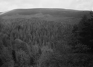 Forestry view, Radnorshire
