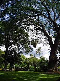 Foster Botanical Garden (general view) - Honolulu, HI.JPG