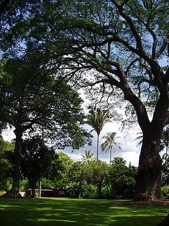 Foster Botanical Garden - General view of the garden