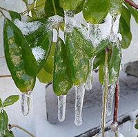 Freezing rain.jpg