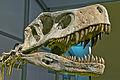 Frenguellisaurus ischigualastensis DSC 6183.jpg