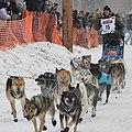 Friendliest ultra competition ever. -Iditarod (16815151275).jpg