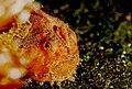 Frogfish2.jpg