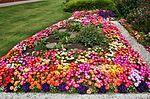 Front garden IMG 1306 (14724833851).jpg