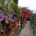 Funchal, Madeira - 2013-01-05 - 85551655.jpg