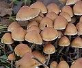 Fungi 7 (4086503406).jpg