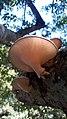 Fungi perfectionWP 20170118 11 25 26 Pro.jpg