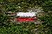 GR footpath label painted along the GR 16 in Vresse-sur-Semois (DSCF5096).jpg