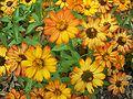 Gainesville FL Kanapaha Botanical Gardens flower01.jpg