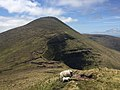 Galtymore summit from the east.jpg