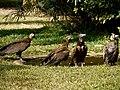 GambiaSenegambiaHotel084 (11853923216).jpg