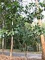 Gardenology.org-IMG 7241 qsbg11mar.jpg