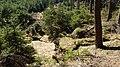 Gelobtbachtal, údolí Klopotského potoka - panoramio (13).jpg