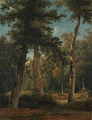 Een bos te Fontainebleau