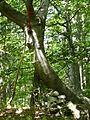 Gipfelkreuz Soosser Lindkogel FoNo.jpg