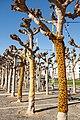 Giraffe yarn bombing 20180120-9722.jpg