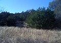 Gov Canyon State Nat Area1.JPG