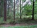Grabhügelgruppe Hartwald Wald 2.jpg