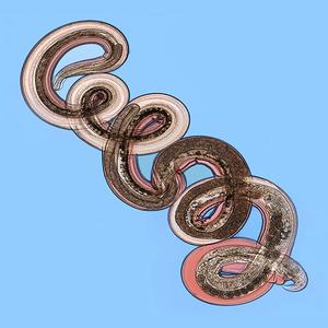 Nippostrongylus brasiliensis - Image: Gravid adult female Nippostrongylus brasiliensis image.pntd.v 07.i 08.g 001