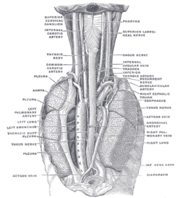 bronchial artery
