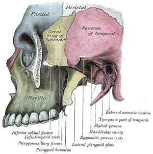 Tympanic part of the temporal bone - Image: Gray 189