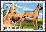 Great-Dane-Canis-lupus-familiaris Romania 1990.jpg