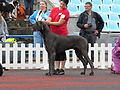 Great dane blue (full).JPG