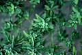 Green leaf rosettes (Unsplash).jpg
