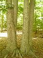 Greenbelt Park, Greenbelt, Maryland 004.JPG