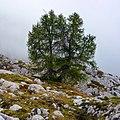 Grigna settentrionale - panoramio (7).jpg
