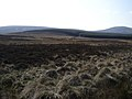 Grouse Moor at Hare Law Burn - geograph.org.uk - 384614.jpg
