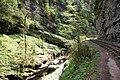 Guam canyon, Гуамское ущелье, лес, Западный Кавказ.jpg
