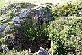Guriezo 04 dolmen by-dpc.jpg