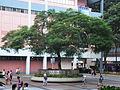 HK TST East Hong Kong Museum of History tree Aug-2012.JPG