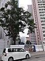 HK WTS 黃大仙 Wong Tai Sin 睦鄰街 Muk Lun Street December 2020 SS2 15.jpg