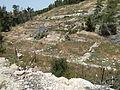 Hadassah Trail P1150497.JPG