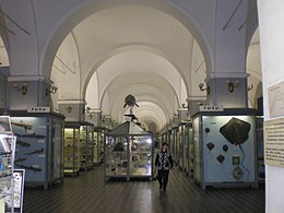 Hall in Museum of Zoology (Saint Petersburg)0.jpg