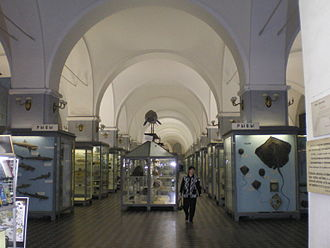Zoological Museum of the Zoological Institute of the Russian Academy of Sciences - The second hall, fishes