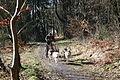 Halver - Schlittenhunderennen 20 ies.jpg
